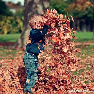 jugar con hojas